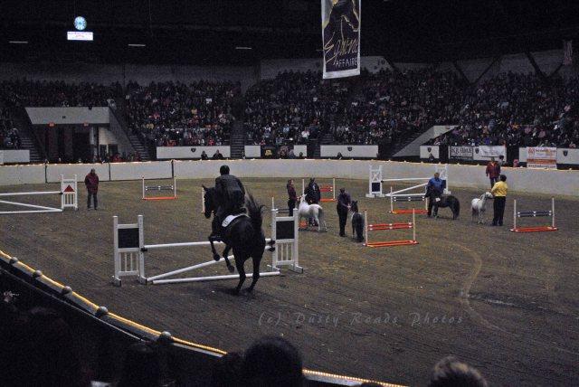 horse show 369 copy