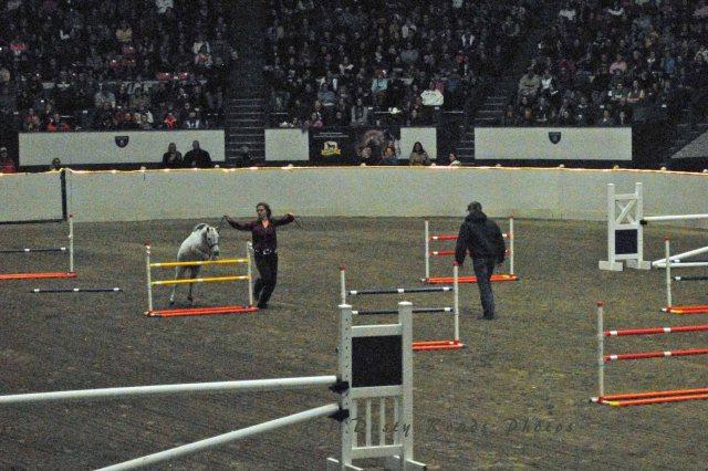 horse show 379 copy