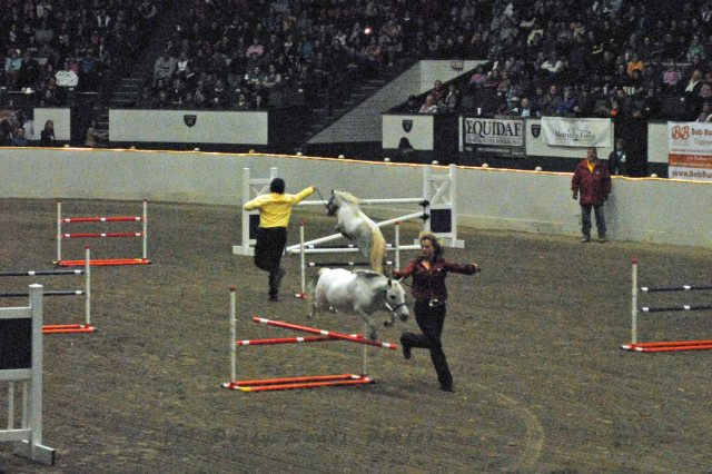 horse show 383 copy