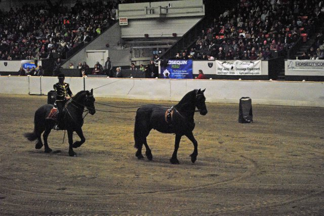 horse show 392 copy