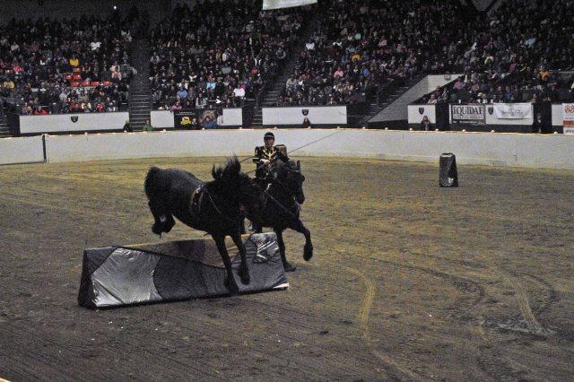 horse show 401 copy
