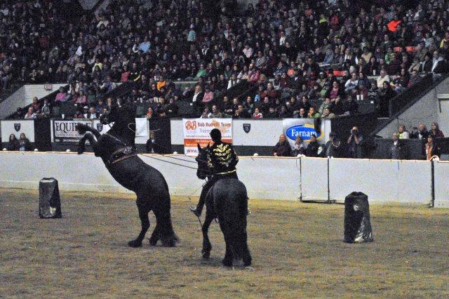 horse show 407 copy