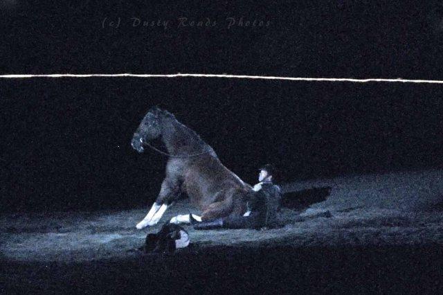 horse show 443 copy
