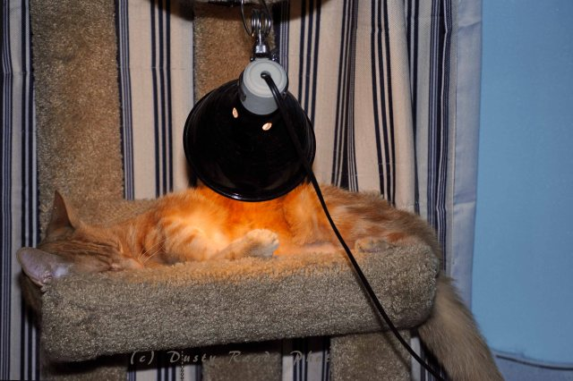 heat lamp 002 copy