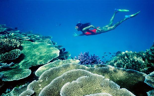 Coral-Reef-Snorkel_2279967b