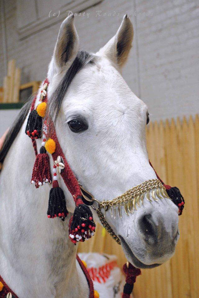 horse show 040 copy