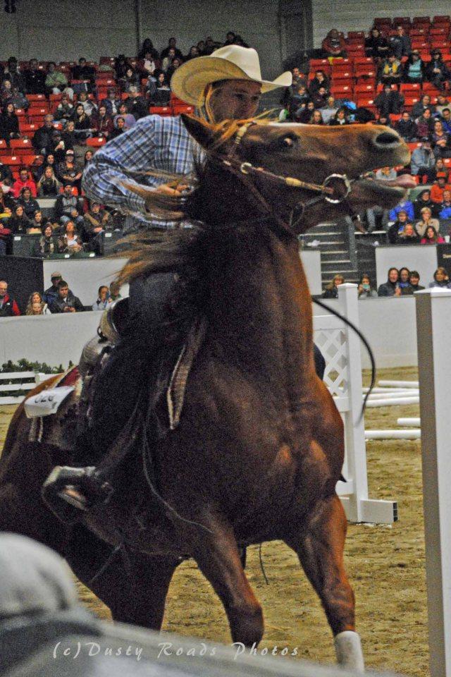 horse show 185A copy
