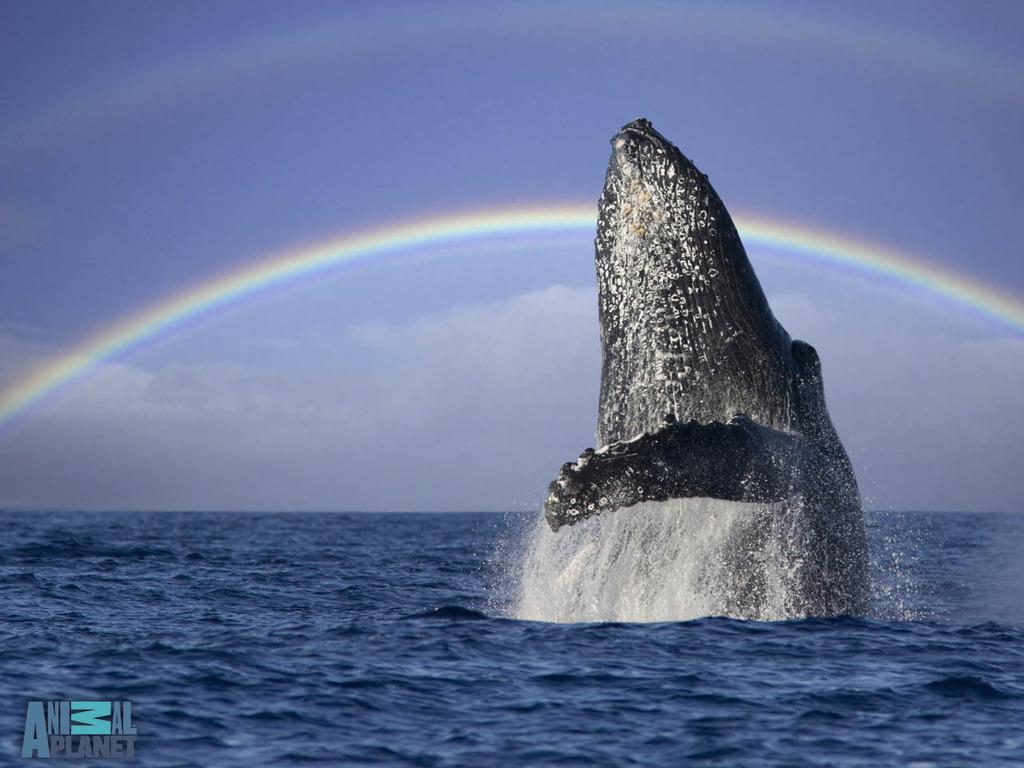 Whale Watching Grand Manan Island