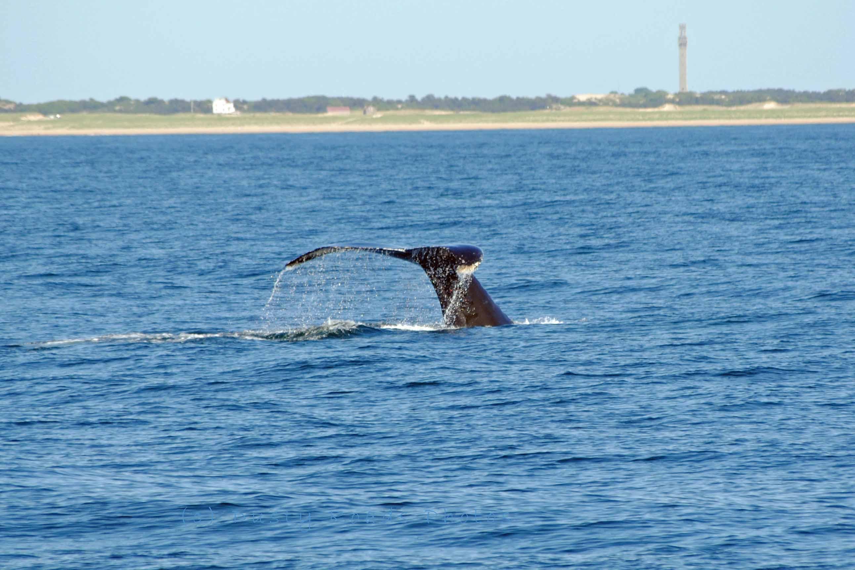 Whales 074a copy