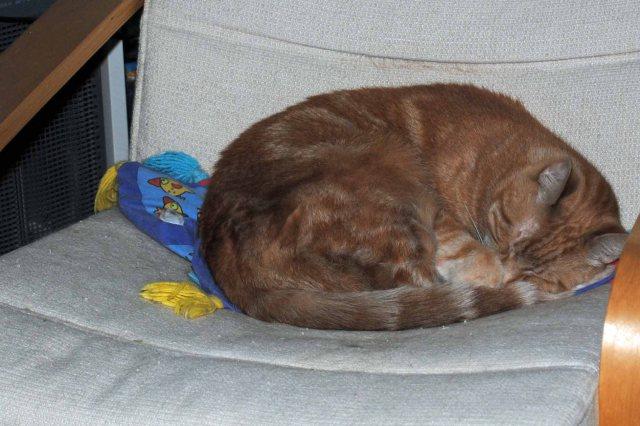 Kitties 002 copy