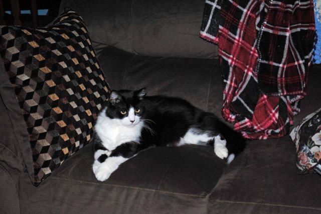Kitties 003a copy