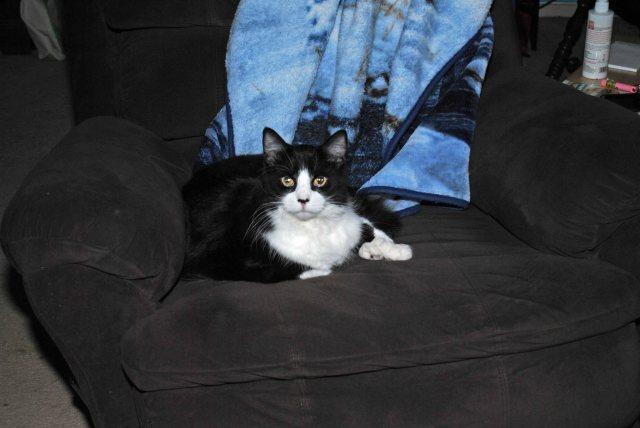 Kitties 006a copy