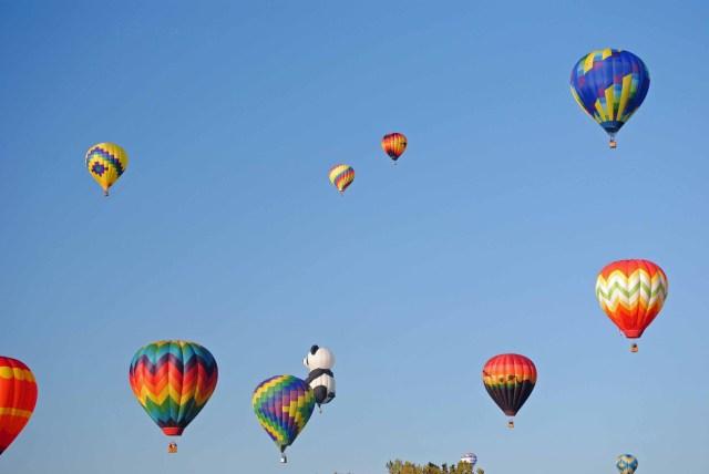 Balloons 2014 095 copy