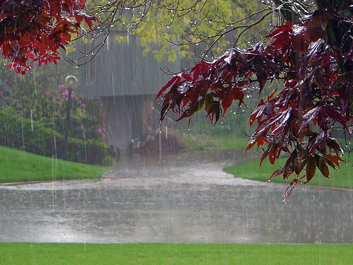 rainy day (laff4k)