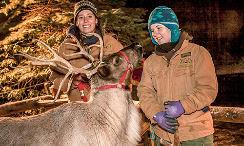 zoolights_reindeer