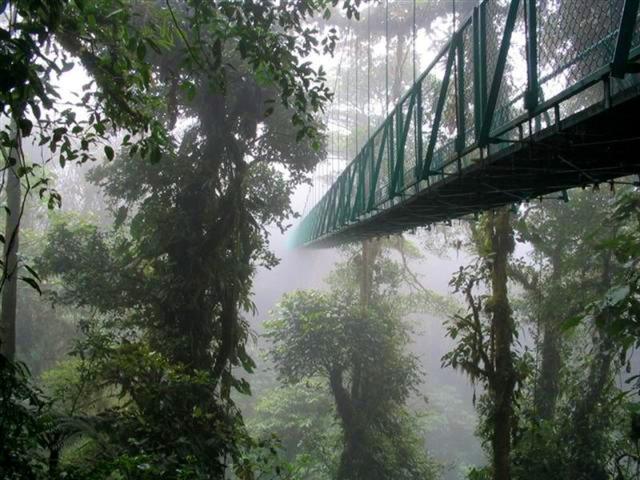 Cloud-Forest-Bridge-travelmuse.com_