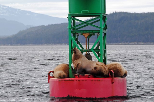 Alaska2013 252 copy