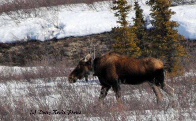 Alaska2013 809 copy
