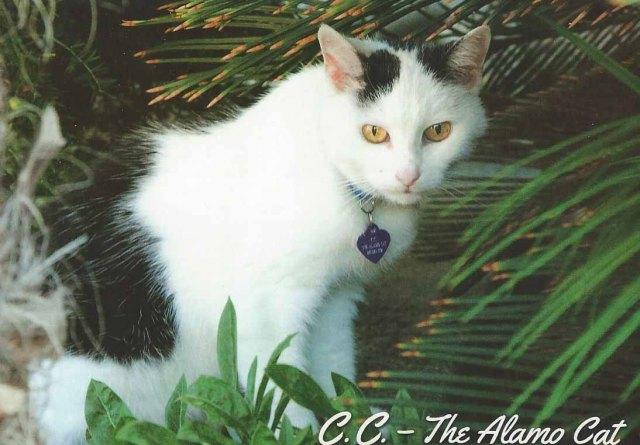 Alamo Cat