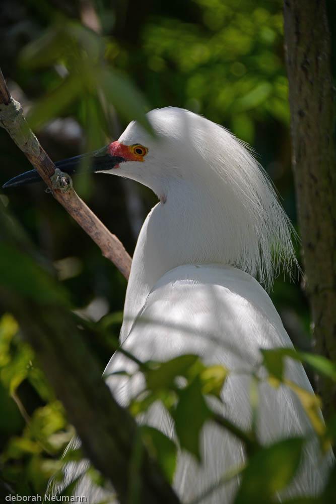 Egret #2, Orlando Florida