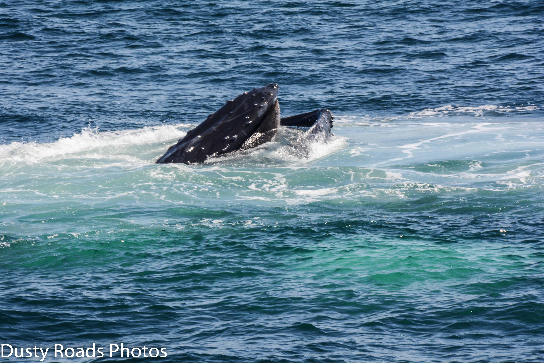 Baleen1