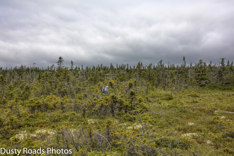 Peat Marsh