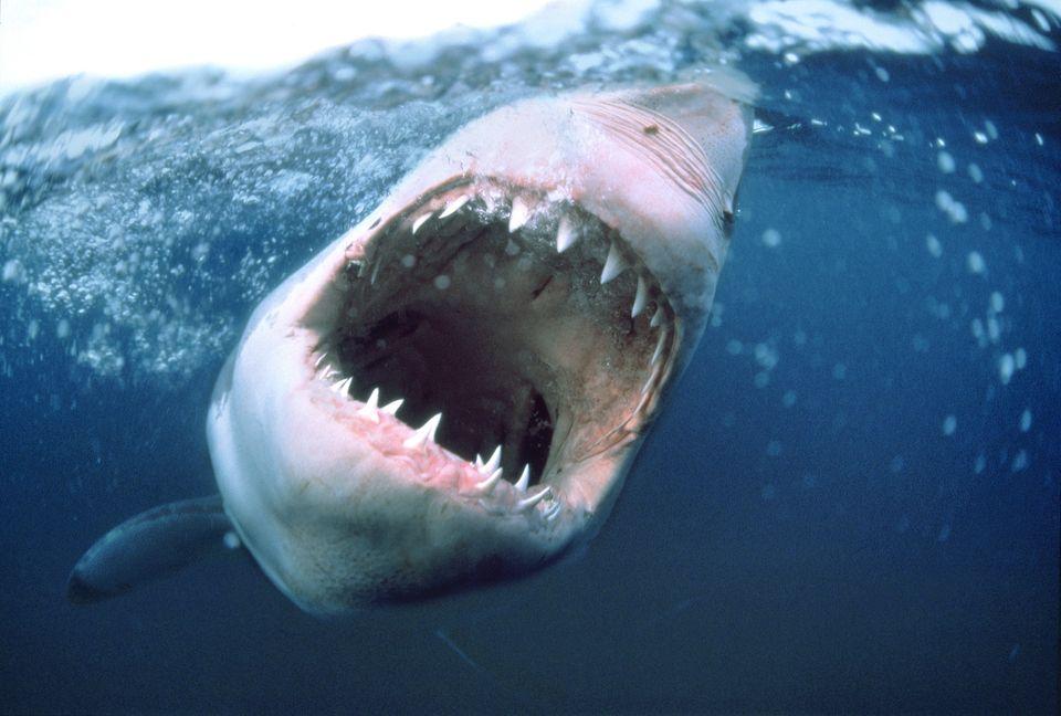 great-open-mouth-shark-portrait-tattoo-1