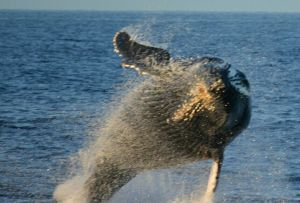 happy-whale